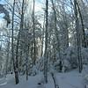 Winter woods!