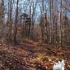 November woods.