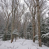 Lovely birch glades.