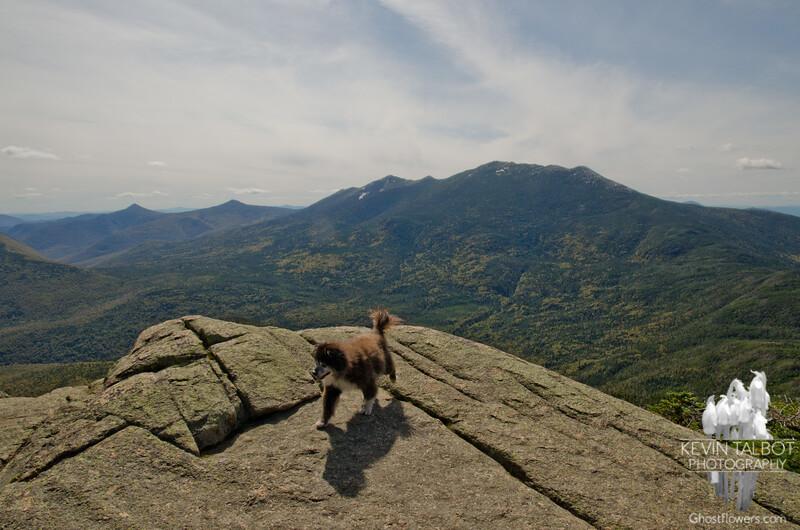 Little dog, big wilderness!