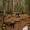 Trail buddies, again!