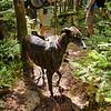 Beautiful brindle Greyhound rescue.