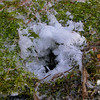 Frost around a rodent nest from their tiny breath.