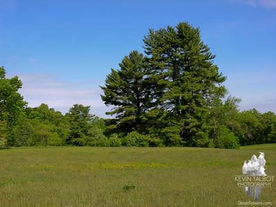 Maudsley State Park 5-27-07