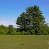 Across the Meadow 1.