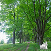Maple Path.