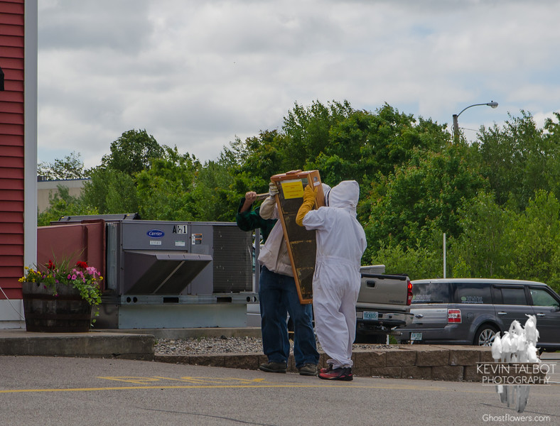 We met at Tuckaway Tavern to hike in Pawtuckaway. Some bee Keepers were moving this glass hive into the market.