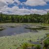 Beaver Pond which feeds Round Pond...