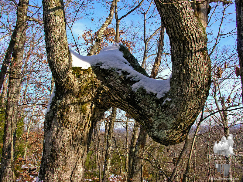 What makes a tree take on a shape like this?