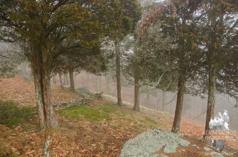 Ancient Cedars.