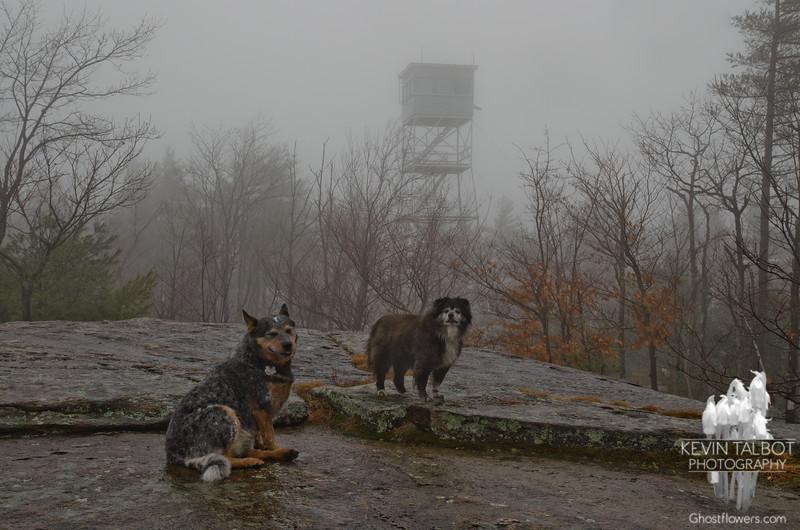 Damp dogs...