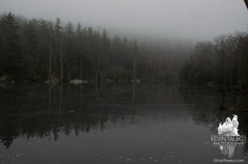 Frozen swamp.