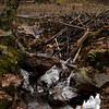 Beavers are trying to plug the hole in this ancient dam...