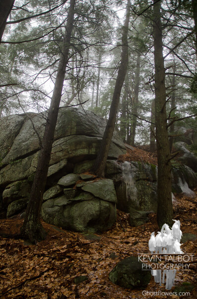Rocks and trees...