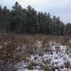 Frozen Marsh 1.