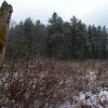 Frozen Marsh 2.