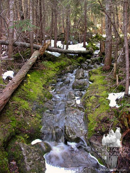 Pine Link Trail?