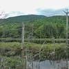 Shingle Pond