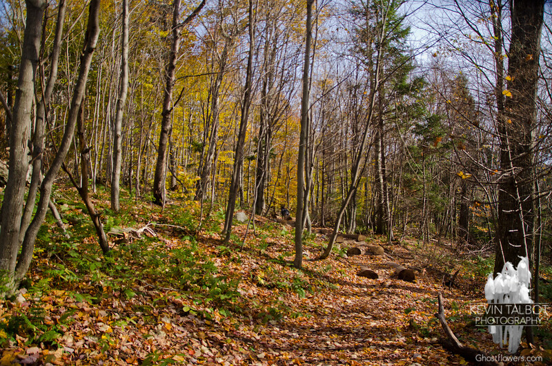Skidder road through young, open hardwoods.