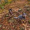 Trail buds!