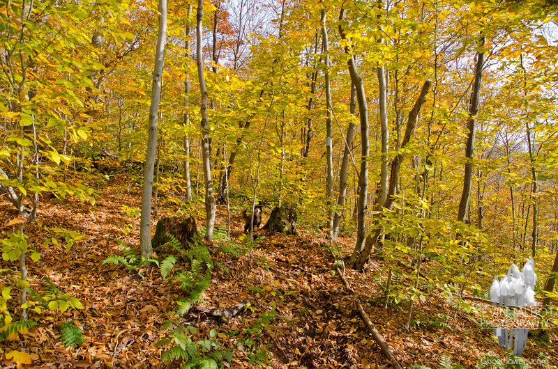 Lots of golds in the understory.