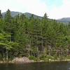 Across the pond there is a huge beaver lodge.