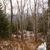 Birch Glades 1.