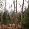 Birch Glades 3.