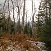 Birch Glades 2.