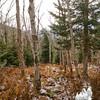 Birch Glades 4.