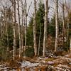 Birch Glades 5.