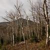 Birch Glades 6.