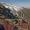 Diapensia mats on the Durand Ridge 2.