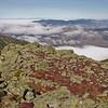 Diapensia mats on the Durand Ridge 3.