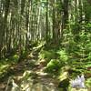 Higher on the Asquam Ridge Trail.