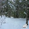 Mount Morgan Trail.