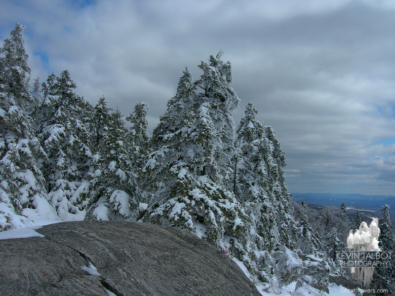 Mount Morgan Trees 4.