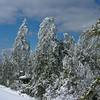 Mount Morgan Trees 2.