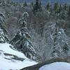 Mount Morgan Trees 5.
