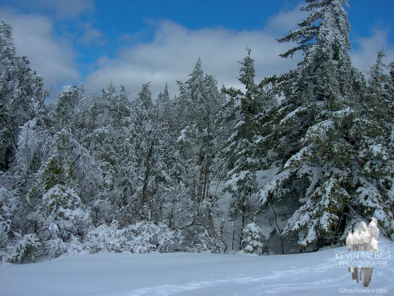 On the Crawford-Ridgepole Trail.