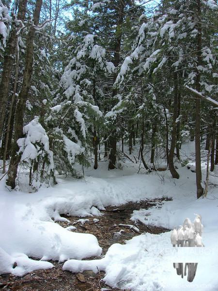 Seasonal brook on the Mount Morgan Trail.