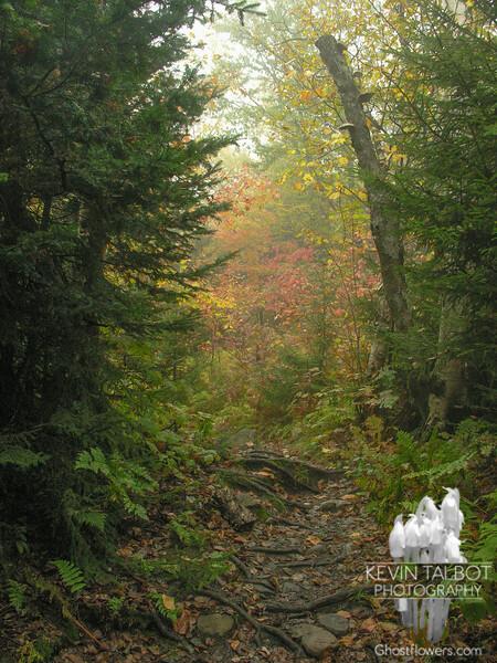 Long Trail.