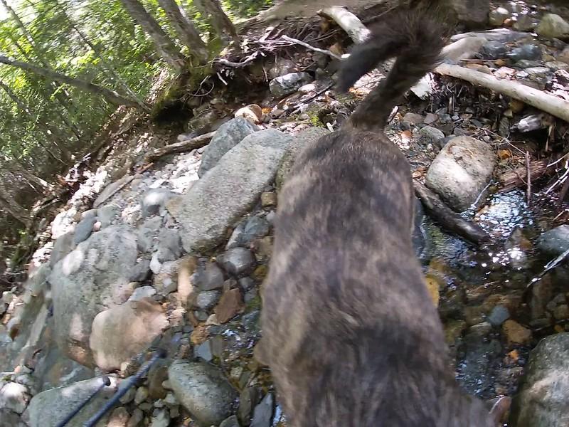 VIDEO: First little brook crossing...