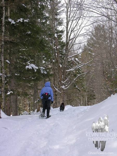 Snowshoeing on the Holt Trail.