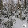 Glazed hardwoods gave way to snow covered evergreens.