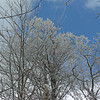 The taller trees had beautiful coatings.