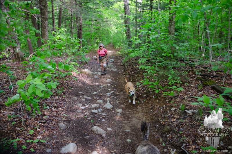 Starting out on the Champney Falls Trail.