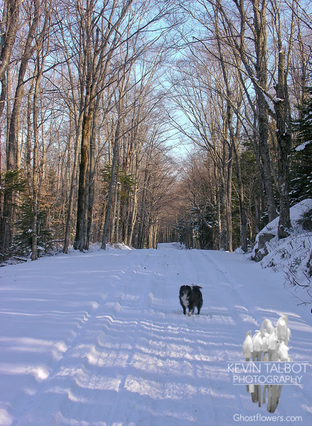 Emma leads the way on the Mount Clinton Road.
