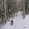 Emma waits along the trail.