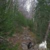Canopy of birch, understory of hemlock.